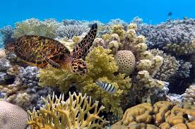Great Barrier Reef National Geographic Society