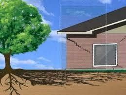کتاب ریشه درختان و ساختمانها