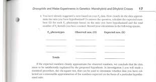 biology archive com drosophila and maize experiments in genetics monohybrid and dihybrid crosses 17 e you have