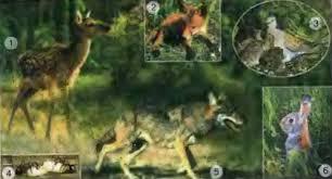 Из чего состоит экосистема леса Биология Реферат доклад  Рис 58 Обитатели леса 1 олень 2 лиса 3 горлица 4 муравьи 5 волк 6 заяц