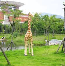 large resin giraffe ornaments outdoor sculpture fibergl model of the garden nursery decorations