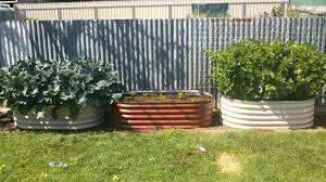 vegetable garden beds