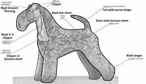 How To Trim A Kerry Blue Dog Salon Dog Grooming Schnauzer