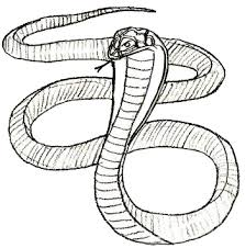 simple snake drawings in pencil. How To Draw Snake Step Intended Simple Drawings In Pencil