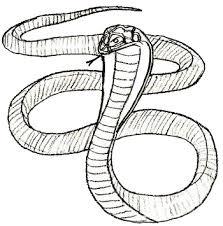 easy cobra snake drawings.  Cobra How To Draw Snake Step 5 For Easy Cobra Snake Drawings
