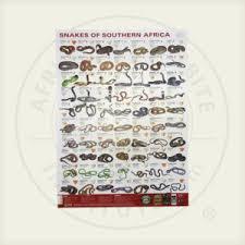 Snake Identification Chart Snake Identification Chart African Snakebite Institute