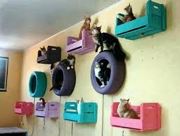 cat shelf ideas cat shelves for walls painted tires crates and cat toys from the ceiling cat shelf