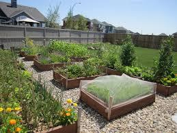 vegetable garden in florida best alices