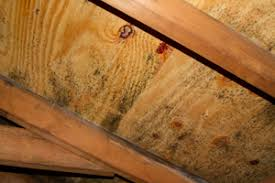 mold in attic. Simple Attic Mold Growing On Roof Sheathing In Stamford Attic With In Attic I