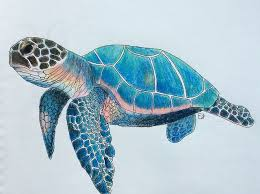 Small Picture Best 25 Sea turtle art ideas on Pinterest Turtle painting Sea