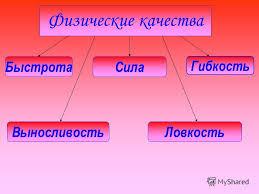 Презентация на тему Физические качества Быстрота Сила Гибкость  5 Физические качества Быстрота Сила Гибкость ВыносливостьЛовкость