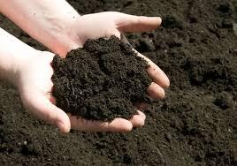 gardening landscaping soil