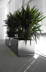 office plant displays. Wonderful Office Contemporary Stainless Steel Plant Pot With Yukka Inside Office Plant Displays R