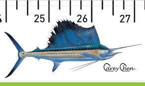 Sailfish Size Chart Sailfish Release Ruler Release Ruler