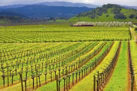 wine country san francisco wine country tours to napa valley and sonoma county