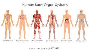 1000 Anatomy Stock Images Photos Vectors Shutterstock