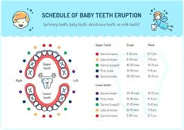 Baby Teeth Chart By Age Ada Tooth Eruption Chart Baby Book