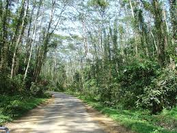Image result for shadowry leaves