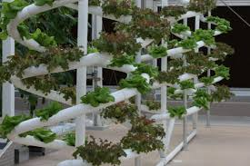 how to build a hydroponic garden. walt disney hydroponics how to build a hydroponic garden