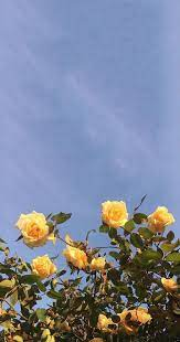 Yellow Aesthetic Flowers Wallpapers ...