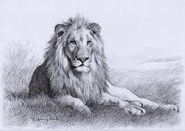 detailed lion drawings in pencil. Unique Drawings Resting Lion Drawing On Detailed Drawings In Pencil A