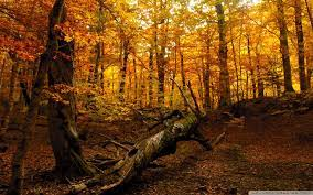 Fall Forest Wallpapers - Top Free Fall ...