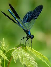 Dragonfly Dragonfly Vážka Borboletas Insetos Bonitos A
