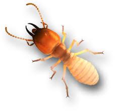 Image result for Pest Manage