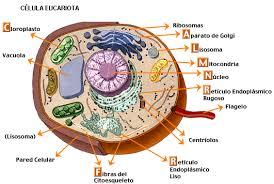 Biología en linea 5A: Células Eucariotas y Procariotas