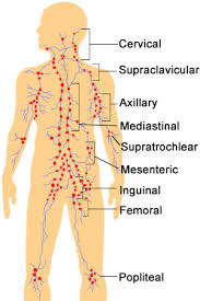 Picture Of Lymph Nodes In The Body Goldenacresdogs Com