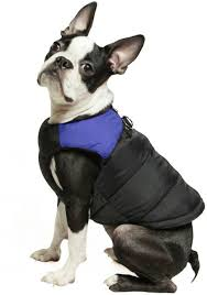 Gooby Padded Cold Weather Vest For Small Dogs With Safe Fur Guard Zipper Closure Blue X Large