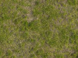 wild grass texture. Delighful Texture Texture Consisting Of Inconsistent Grass Varying Types And Lengths With Wild Grass S