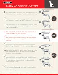 Purina Body Condition Score Chart Body Score System For Dogs