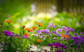 flowers wallpaper hd 1080p picserio com