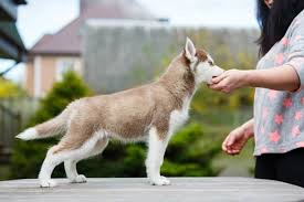 Dog Training Hand Signals Commands And Hand Signals For Dog