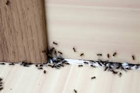 Ants In Kitchen Cabinets Interesting Design Ideas