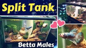 aquarium tank decoration ideas diy divider tank fish tank ideas of aquarium tank decoration ideas unique