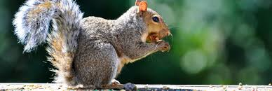 diy squirrel house plans elegant prince charles is waging war on britain s grey squirrels with