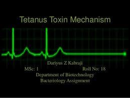 tetanus toxin tetanus toxin mechanism 1 638 jpg cb 1425021695
