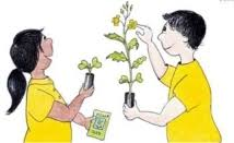 Image result for growing plants year 2