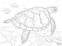 Realistic Hawksbill Sea Turtle Coloring Page