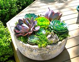 Make beautiful compositions with succulents, experiment, and experience.