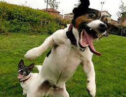 littermate syndrome can cause dogs to bee aggressive towards each other people or