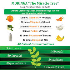 Moringa Comparison Chart Organic Moringa Premium Oil Cold Pressed 100ml 3 4 Fl Oz 100 Natural And Pure Oil Usda Certified Organic