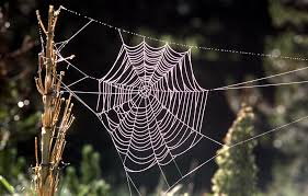 Image result for spider in web