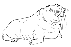 Small Picture Free Printable Walrus Coloring Pages For Kids spesific Walrus