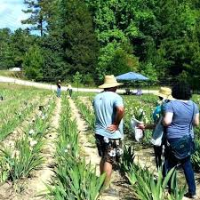 craigslist hawaii farm and garden farm and garden furniture farm and garden inspirational with regard to