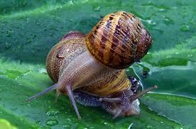 """Résultat de recherche d'images pour """"mollusques"""""""