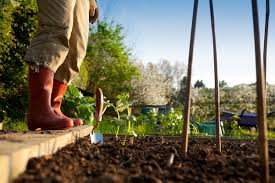 Gardening Tips That Can Save You Over $700   Spending   US News
