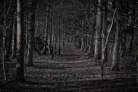 66 Creepy Forest Wallpapers On Wallpaperplay